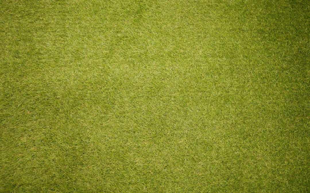 Vad innebär skötsel av grönytor?