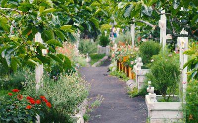 Avlånga odlingslådor ramar in trädgården